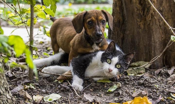 Ação conjunta oferecerá castração de Pet's gratuitamente em Santa Helena
