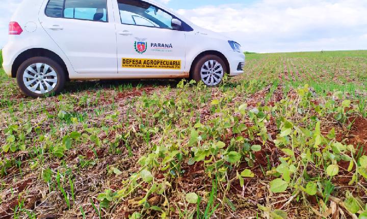 Adapar alerta agricultores paranaenses para o vazio sanitário da soja