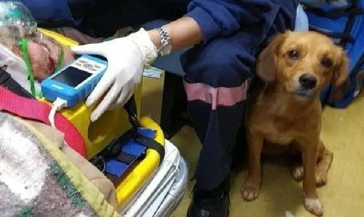 Cachorrinha que ficou com o dono após atropelamento ganha lar temporário